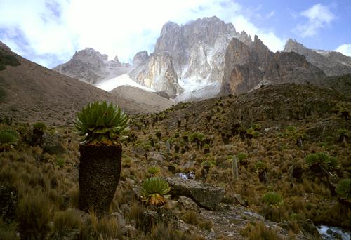 Mount Kenya seen from Mackinder's Valley
