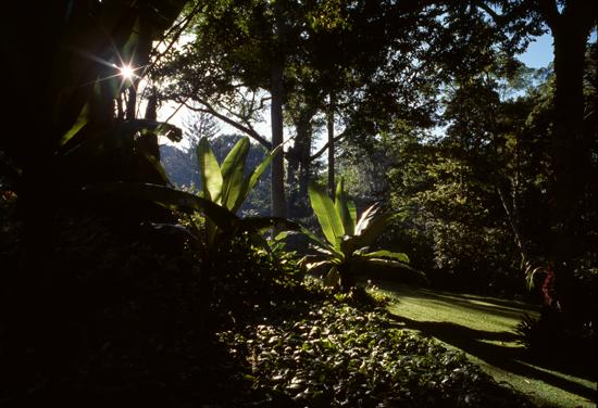 Kakamega forest at Rondo Retreat