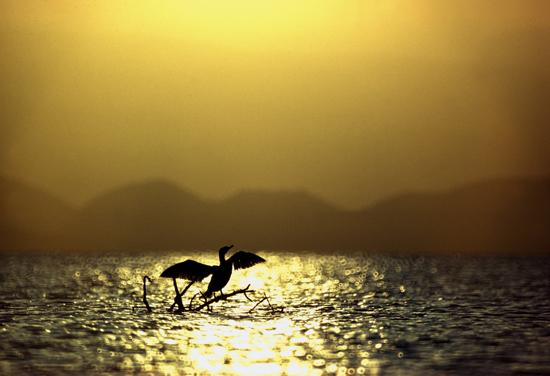Cormorant Lake Naivasha