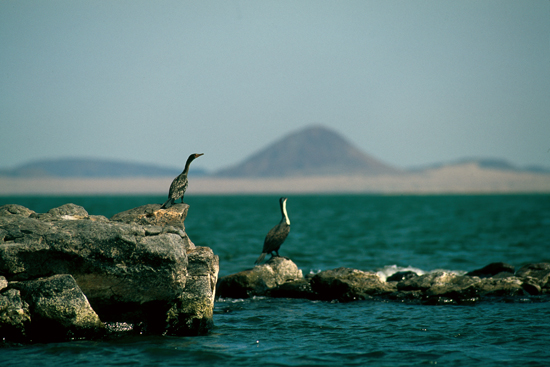 Cormorants at the Jade Sea