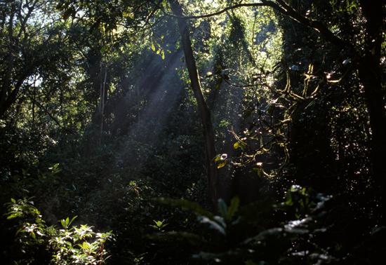 Kakamega forest mist