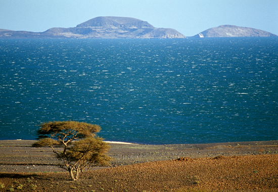 Lake Turkana with an acacia tree in the foreground