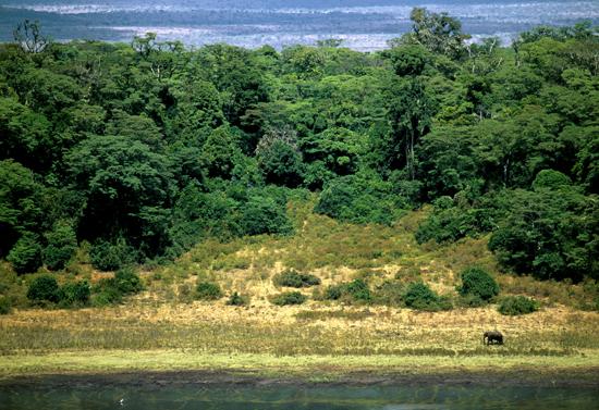 Lone elephant Lake Paradise