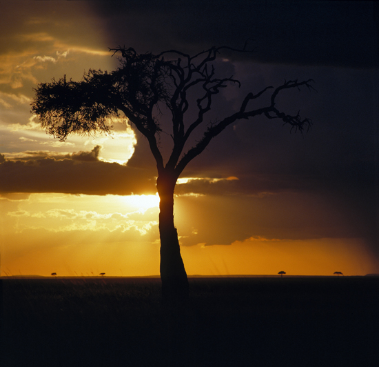 Sunset in Masai Mara National Reserve