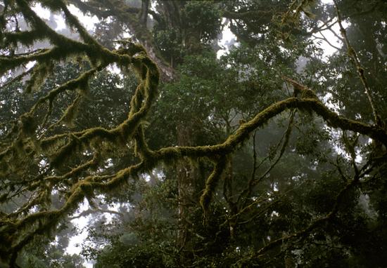 Cloud forest in Marsabit national Park in kenya