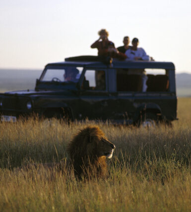 Tourists photographing a male lion from a Land Rover during a safari in Masai mara
