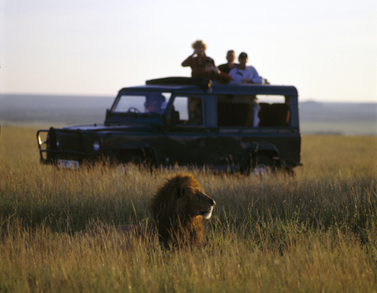 Tourists photographing a male lion from a Land Rover during a safari in the Masai Mara, Kenya