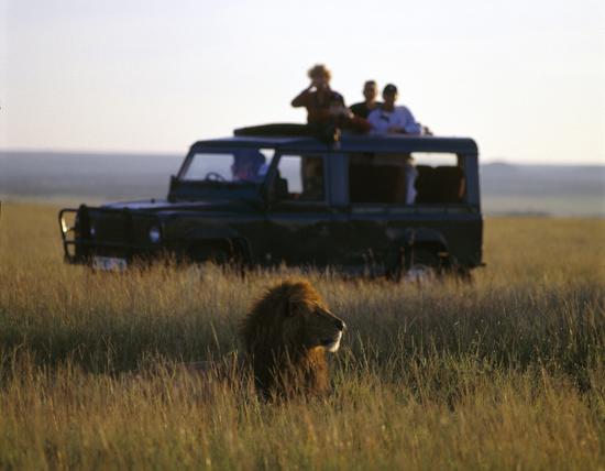 Lion in Masai Mara, Kenya