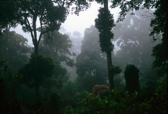 Forest in Marsabit National Park