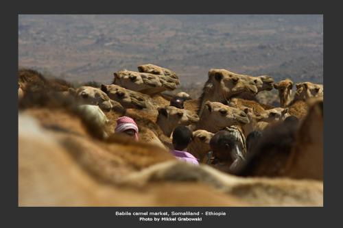 Camels at a market