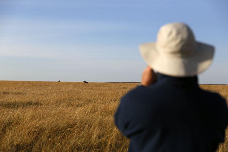 Walking safari in Masai Mara