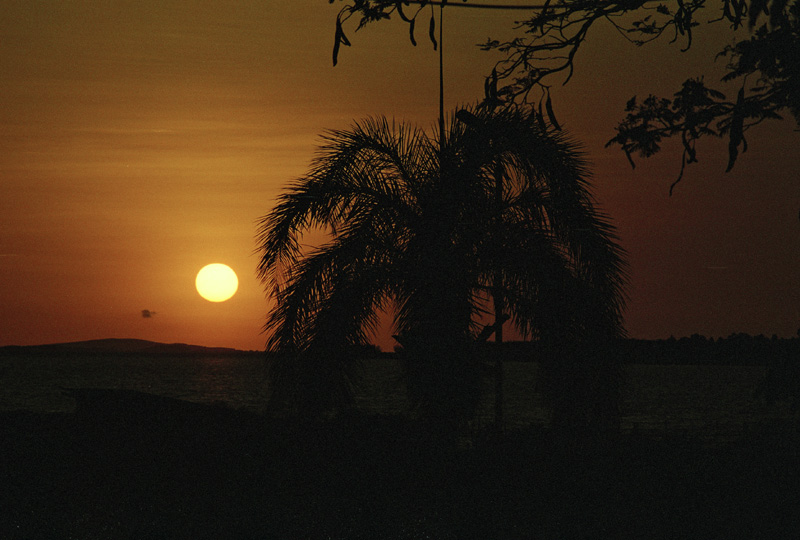 Palm tree at sunset, Lake Victoria, Kenya
