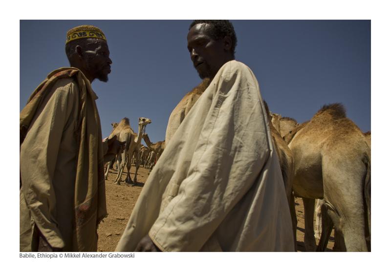 camel, babile
