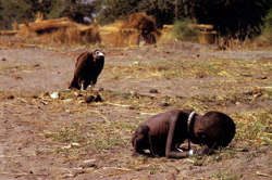 Kevin Carter's Pulitzer prize winning photo of a vulture stalking a child -  Photo © Kevin Carter 1993
