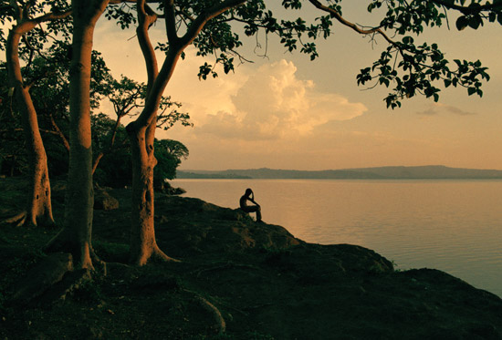 A man sitting beneath big fig trees in Amora Gedel Park in Hawassa