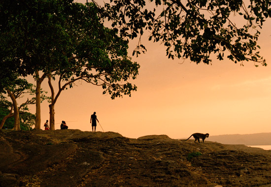 A few locals and a vervet monkey under the big fig trees on the shore of Lake Awasa