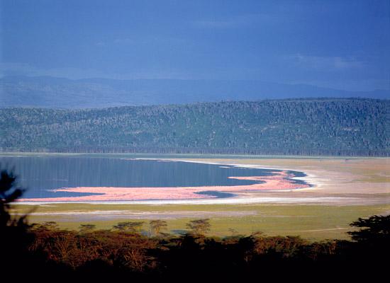 Pink Flamingos in Kenya's Lake Nakuru
