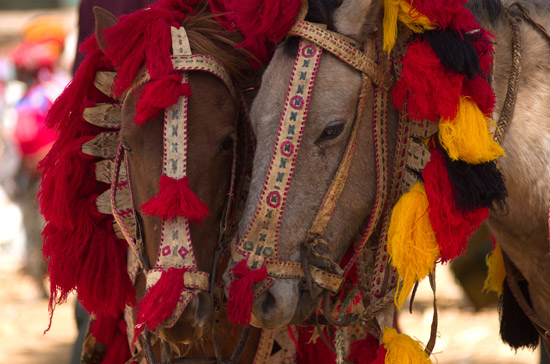 Two horses in Chencha with colorful head dresses